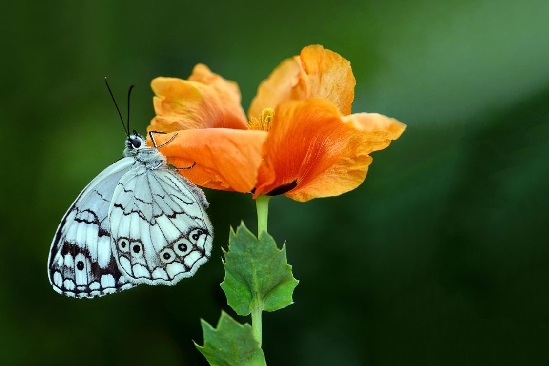 Обои цветок, бабочка, макро картинки на телефон