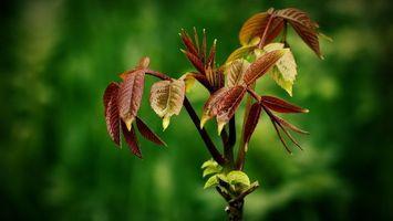 Заставки листья, дерево, ветка, лес
