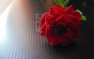 Фото бесплатно ноутбук, роза, лепестки