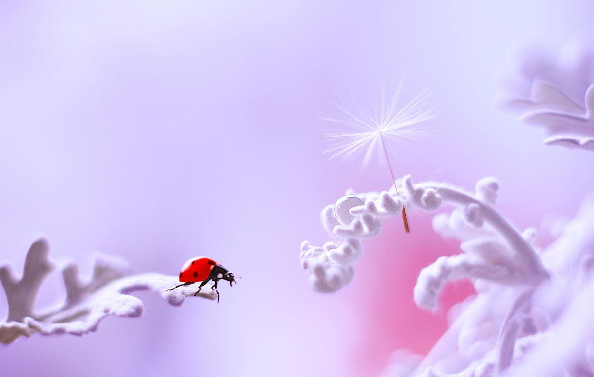 Фото бесплатно божья коровка, насекомые, растение - на рабочий стол