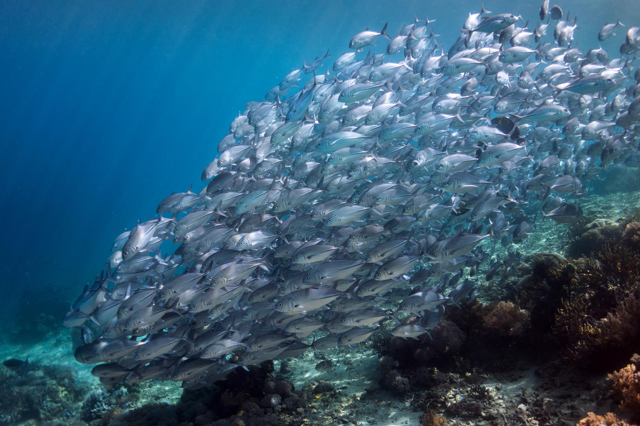 обои рыба, под водой, мелководье, коралловый риф картинки фото