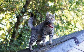 Бесплатные фото кошка,морда,лапы,хвост,шерсть,ошейник,крыша