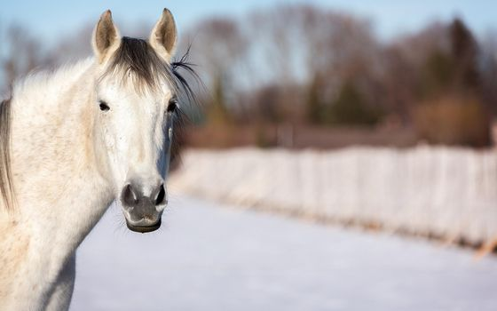 Photo free horse, muzzle, eyes