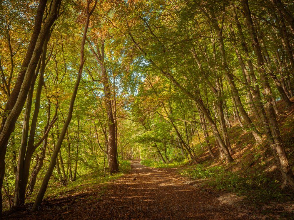 Фото бесплатно осень, лес, деревья, дорога, пейзаж, пейзажи