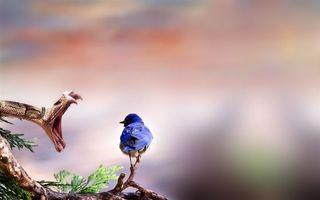 Фото бесплатно нежданчик, змея и птица, еда