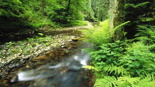 Фото бесплатно лес, речушка, кустарник