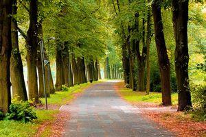 Бесплатные фото лес, деревья, парк, дорога, осень, природа, пейзаж