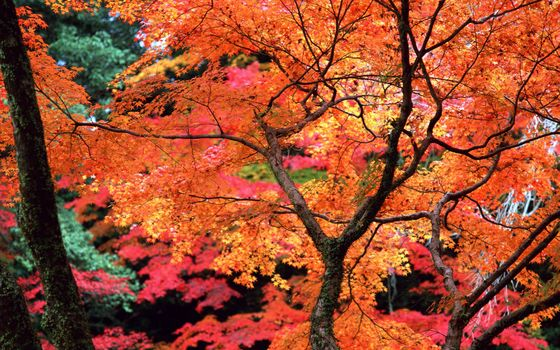Фото бесплатно осень, деревья, ветви, листва, цветная