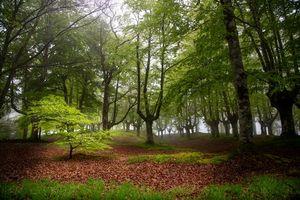 Бесплатные фото Otzarreta,Bizkaia,Spain,лес,деревья,пейзаж