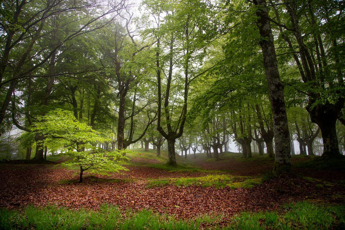 Фото бесплатно Otzarreta, Bizkaia, Spain, лес, деревья, пейзаж, пейзажи