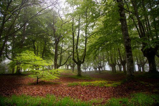 Заставки Испания, деревья, Otzarreta