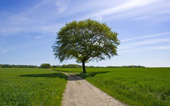 Бесплатные фото поле,зеленое,деревья,тропа,небо,облака