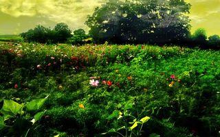 Заставки цветы,трава,лужайка,дерево