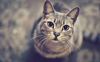 Бесплатные фото кошка,морда,глаза,уши,шерсть