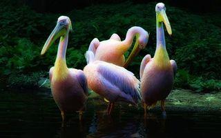 Бесплатные фото птицы,клювы,перья,цветные,крылья,лапы,водоем