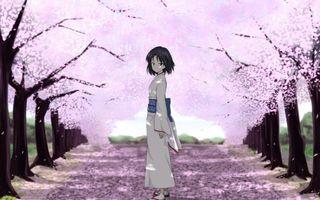 Обои аллея, деревья, сакура, девушка, японка, одеяние