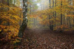 Бесплатные фото осень,лес,деревья,туман,природа