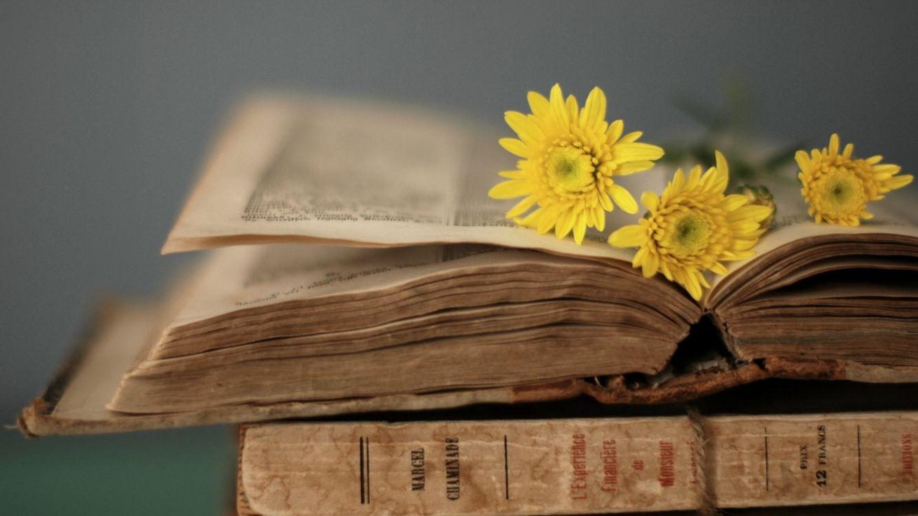 Фото бесплатно Старые книги, обложка, желтые цветы, интерьер, интерьер