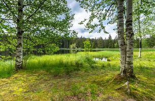Фото бесплатно озеро, Швейцария, лес, деревья, пейзаж