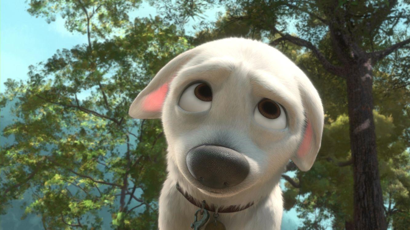 Фото бесплатно собака, щенок, морда, гримаса, ошейник, деревья, мультфильмы