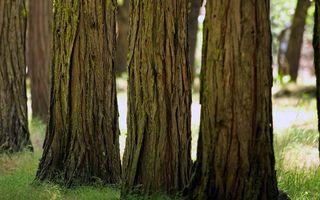 Бесплатные фото трава,зеленая,деревья,стволы,кора,парк