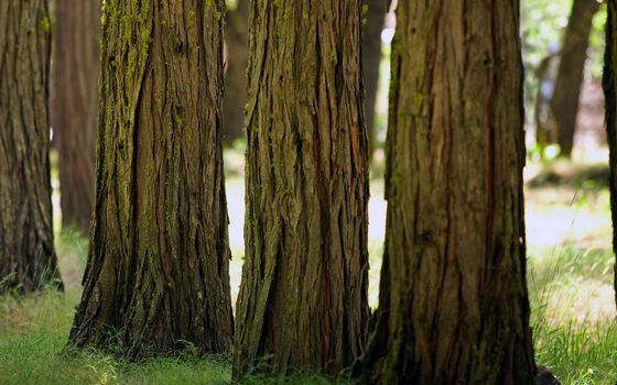 Фото бесплатно трава, деревья, кора