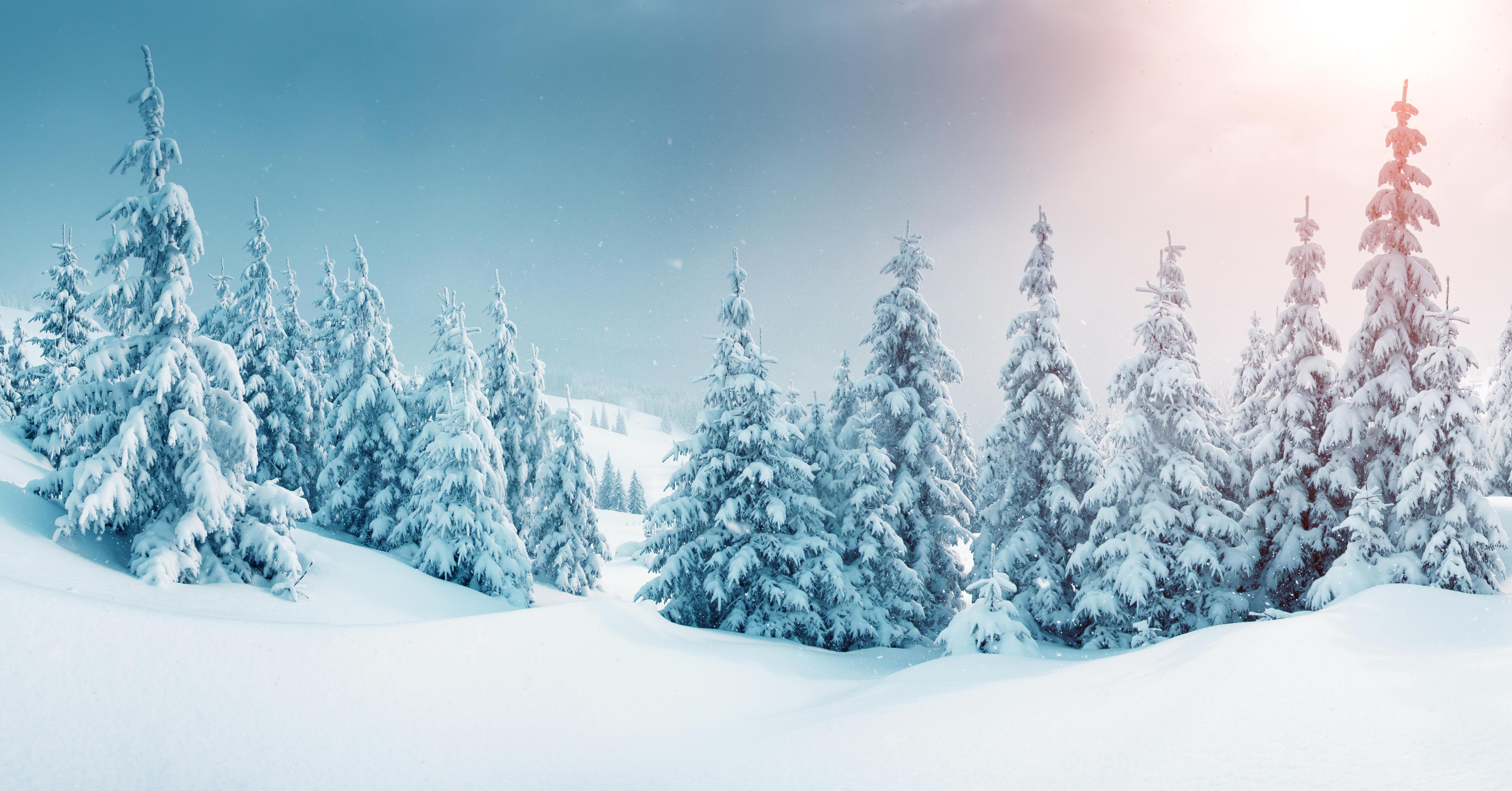 снег ели зима  № 3180876  скачать