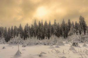 Бесплатные фото зима,снег,закат,деревья,природа,пейзаж