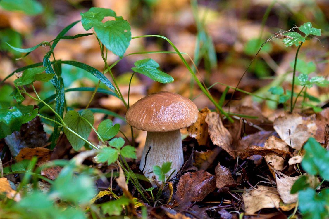 Фото бесплатно лес, гриб, боровик - на рабочий стол