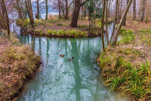 Фото бесплатно утки, лес, природа