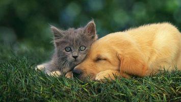 Бесплатные фото щенок,котенок,морды,лапы,шерсть,трава