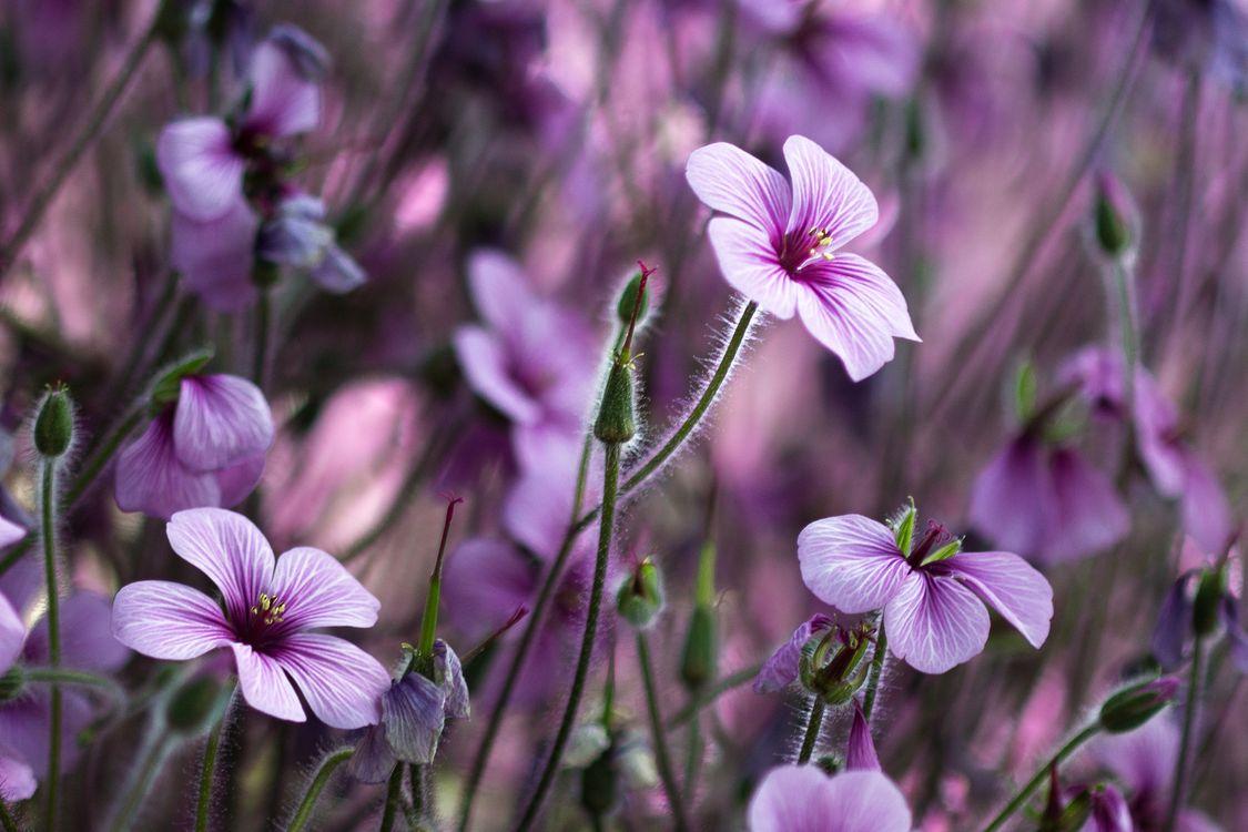 Заставка цветы, флора на рабочий стол