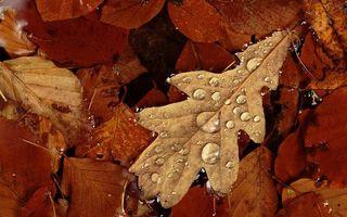 Заставки листья,сухие,прожилки,капли,вода,роса