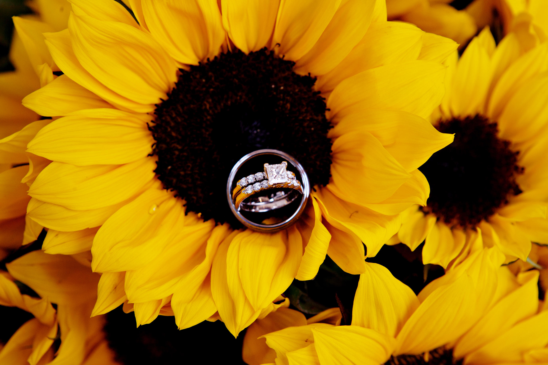 обои праздник, свадьба, кольца, подсолнух картинки фото