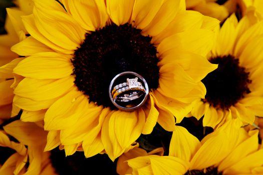 Фото бесплатно праздник, свадьба, кольца, подсолнух