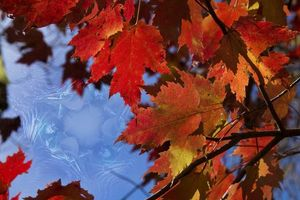 Фото бесплатно осень, макро, ветки