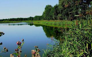 Фото бесплатно озеро, гладь, отражение, деревья, камышь, репей, небо