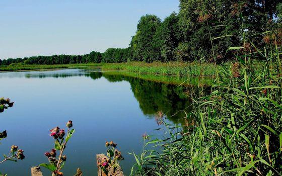Фото бесплатно озеро, небо, камыш
