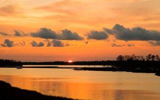 Бесплатные фото вечер,деревья,река,птица,полет,небо,облака