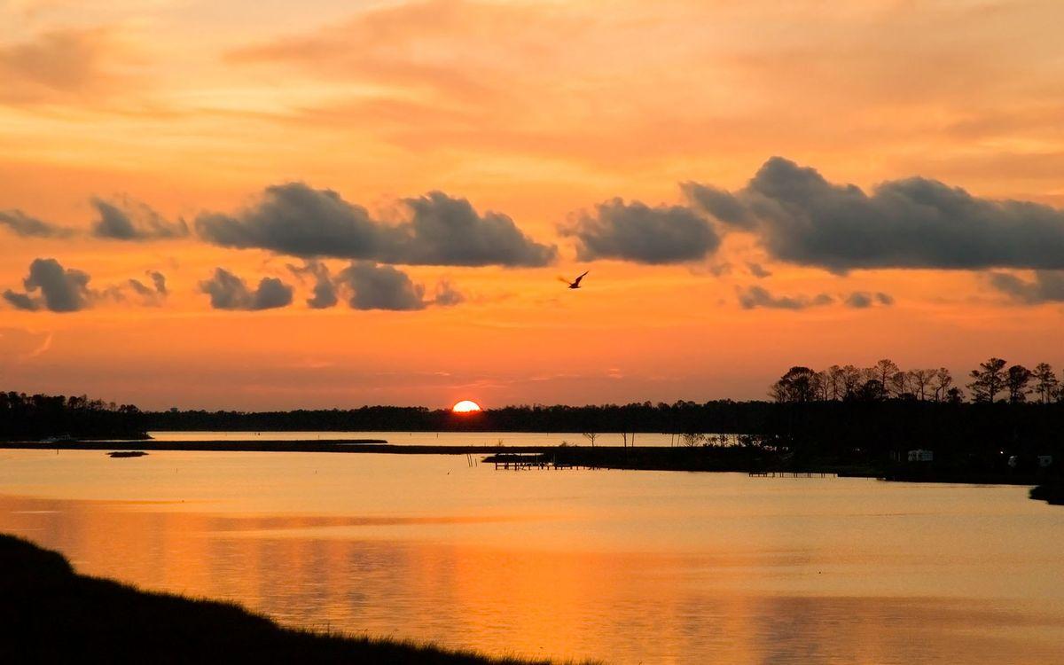 Фото бесплатно вечер, деревья, река, птица, полет, небо, облака, солнце, закат, пейзажи