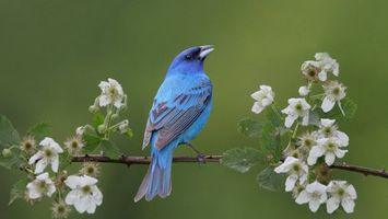 Бесплатные фото птичка,клюв,крылья,хвост,перья,синие,лапки