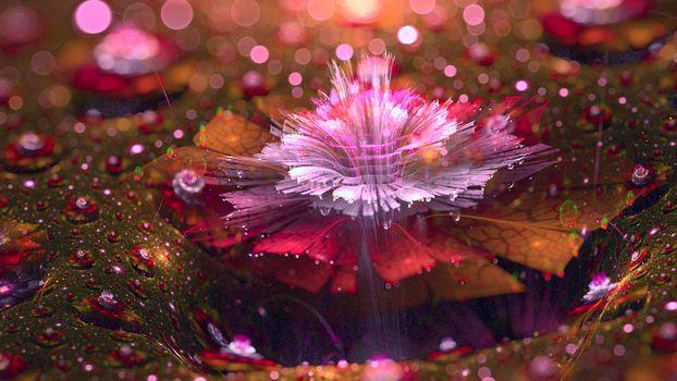 Бесплатные фото дождь,цветок,розовый,красивый