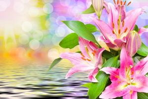 Фото бесплатно красивые цветы, лилии, флора