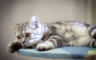 Фото бесплатно морда, кошка, шерсть