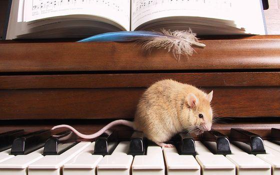 Заставки мышь, грызун, морда