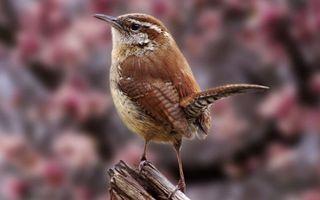 Бесплатные фото птичка,клюв,хвост,перья,лапки