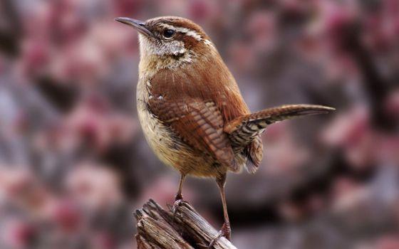 Заставки птичка, клюв, хвост