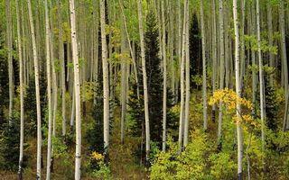 Фото бесплатно кустарники, деревья, трава
