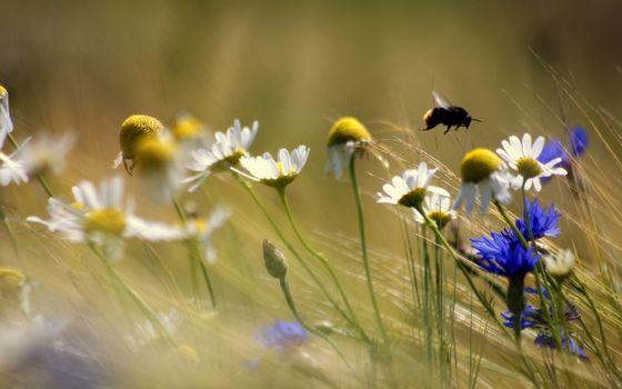 Photo free field, cornflowers, daisies