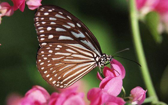 Фото бесплатно цветы, бабочка, крылья